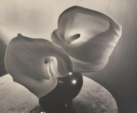 Louise Dahl- Wolfe, Calla Llies, 1931