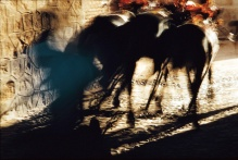 motion-bullfight-color-24
