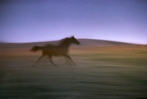 motion-various-color-6