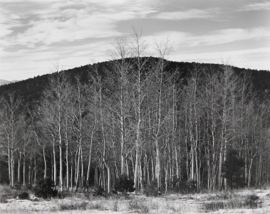 Aspen Valley, New Mexico, Edward Weston, 1937