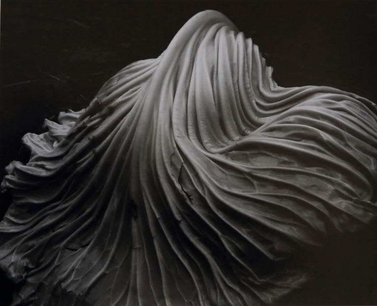 Cabbage leaf, Edward Weston, 1931