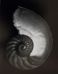 Shell, Edward Weston, 1927