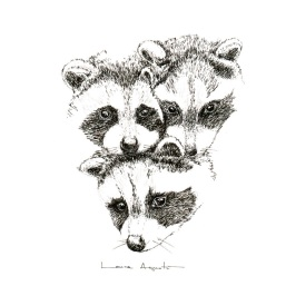 lauraagusti-raccoons_670