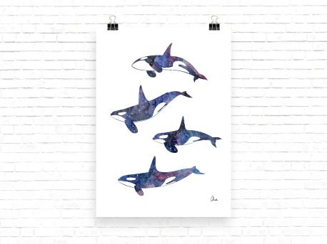orcas-galacticas