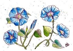 geranios azules